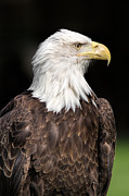 National Symbol Prints - American Symbol Print by Dale Kincaid