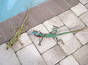 Long Leaf Pine Sculptures - Amiable and Articulate Anoles by Beth Lane Williams