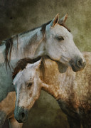 Gray Horses Photos - Amigos by Ron  McGinnis