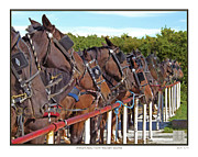 Auction Digital Art Posters - Amish Auction Horse NEIGHbors Poster by Richard Neuman