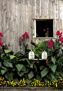 Amish Photo Prints - Amish Barn Print by Diane Diederich