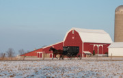 Red Barn In Winter Photos - Amish Buggy and Red Barn by David Arment