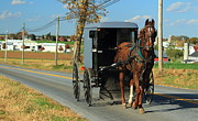 Amish Farms Framed Prints - Amish Buggy on Sunny Day Framed Print by Stephen Hobbs