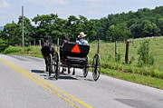 Horse And Buggy Posters - Amish Buggy Poster by Penny Neimiller