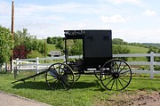 Amish Photographs Photo Framed Prints - Amish Buggy Framed Print by R A W M