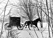 Horse And Buggy Framed Prints - Amish Buggy Revised Framed Print by David Arment