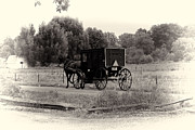Horse And Buggy Framed Prints - Amish Buggy Sept 2013 Framed Print by David Arment