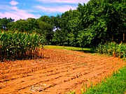 Amish Farms Posters - Amish Corn Field Poster by Annie Zeno