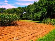 Amish Corn Field Print by Annie Zeno