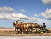 Amish Farmer Photos - Amish farmer plowing by Terry Shoemaker