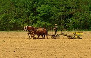 Amish Farmer Photos - Amish Farmer Tilling The Fields by Paul Ward