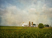Amish People Posters - Amish Farmland Poster by Kim Hojnacki