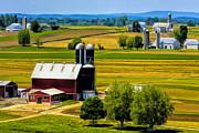 Dominic Piperata - Amish Farms