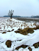 Julie Dant Photo Metal Prints - Amish Field in Winter Metal Print by Julie Dant