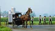Amish Photographs Photo Framed Prints - Amish Going To Church Framed Print by R A W M