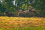 Haying Photos - Amish Harvest by Steve Harrington