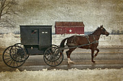 Horse And Buggy Framed Prints - Amish Horse and Buggy and The Star Barn Framed Print by David Arment