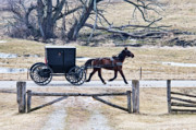 Horse And Buggy Posters - Amish Horse and Buggy Lighting Effects Poster by David Arment