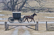 Horse And Buggy Posters - Amish Horse and Buggy March 2013 Poster by David Arment