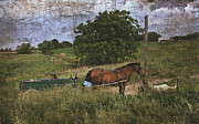 Iowa Framed Prints - Amish Horse Waits With Dog Framed Print by Cassie Peters