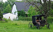 Carriage Horse Photos - Amish Way of Life by Robert Harmon