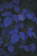 Finches Posters - Among The Blue Leaves Poster by Thomas York