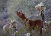 Helmut Hussman - Among the Cholla