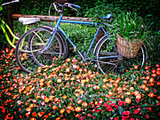 Bikes Prints - Among the Flowers Print by Edward Fielding