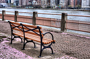 Park Benches Photos - Among the Pedals  by JC Findley