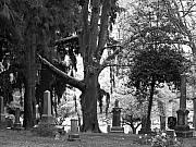 Grave Photos - Amongst the trees by Heather L Giltner