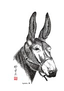 Donkey Drawings Prints - Amos Print by Bill Searle
