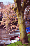 Story Prints - Amsterdam Canals with Blooming Trees. Pink Spring in Amsterdam Print by Jenny Rainbow
