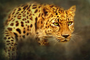 Leopards Digital Art Acrylic Prints - Amur Leopard Acrylic Print by Christina Rollo