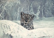 Leopards Paintings - Amur Leopard by Tom Blodgett Jr