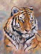 Tiger Painting Posters - Amur Tiger Poster by David Stribbling