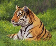 Tiger Painting Posters - Amur Tiger Painting Poster by David Stribbling