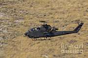 Attack Helicopters Framed Prints - An Ah-1f Tzefa Of The Israeli Air Force Framed Print by Ofer Zidon