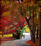 Amish Buggy Prints - An Amish Autumn Ride Print by Lianne Schneider