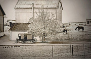 Pa Barns Posters - An Amish Farm Poster by Dyle   Warren