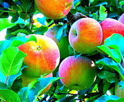 Windy Point Winery Photo Posters - An Apple a Day Poster by Kay Gilley