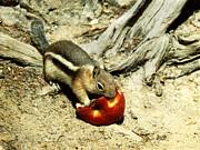 Marilyn Hunt - An Apple A Day