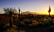 The Supes Prints - An Arizona Morning  Print by Saija  Lehtonen