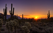 The Supes Prints - An Arizona Winter Sunrise Print by Saija  Lehtonen