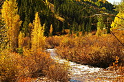 Creeks Prints - An Autum Stream In Colorado Print by Jeff  Swan