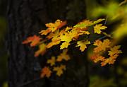 Saija  Lehtonen - An Autumn Bouquet