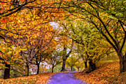 Dominic Piperata - An Autumn Day