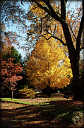 Nature Study Digital Art Posters - An Autumn Holdout - Davidson College Poster by Paulette Wright