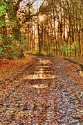 Dave Woodbridge Metal Prints - An Autumn Track Metal Print by Dave Woodbridge