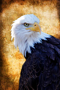 Swooping Framed Prints - An Eagles Standpoint Framed Print by Athena Mckinzie