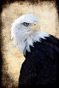 Swooping Framed Prints - An Eagles Standpoint II Framed Print by Athena Mckinzie